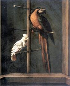 И.Ф. Гроот. Попугаи
