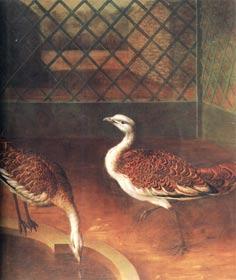 И.Ф. Гроот. Две птицы