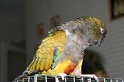Фотографии животных и птиц